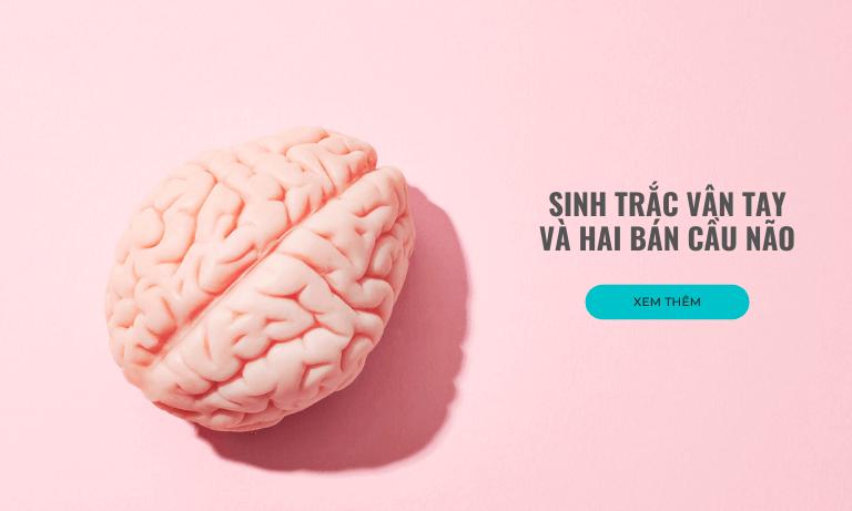 Sinh trắc vân tay và hai bán cầu não
